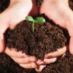 Bật mí cách ủ mùn cưa để trồng rau đơn giản nhưng hiệu quả bất ngờ